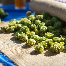 Hops give a lot of flavor to beer