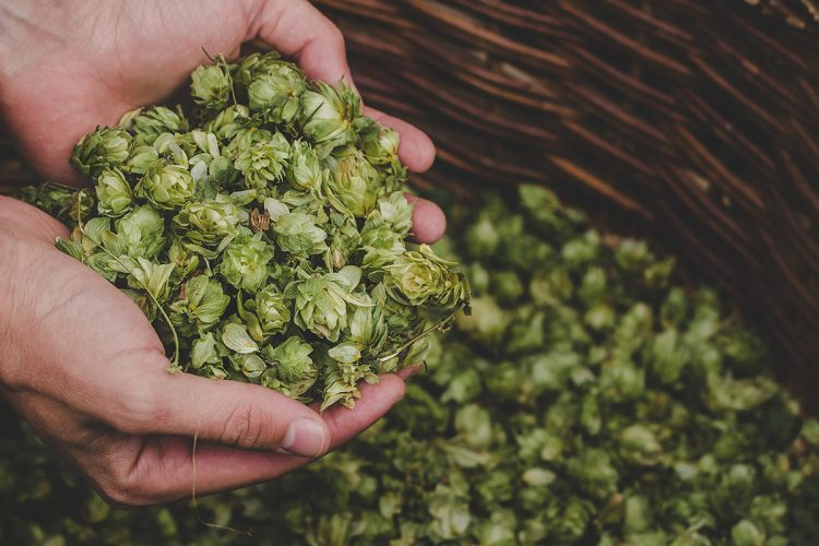 How to dry hop beer